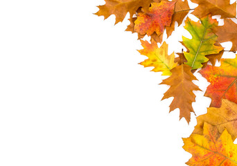 Frame of colorful autumn leaves on white.