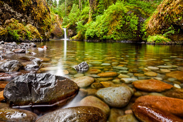 Punch Bowl Falls along the Eagle Creek Trail in Oregon with focus on the rocks in the foreground Wall mural