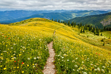 An idyllic scene of yellow, white, and red wildflowers and mountains that go on forever Wall mural