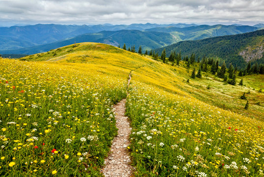An idyllic scene of yellow, white, and red wildflowers and mountains that go on forever
