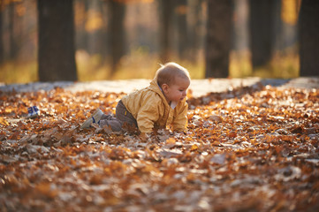 little baby boy crawling among the fallen leaves in the autumn park at sunny day
