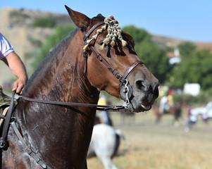caballo en españa