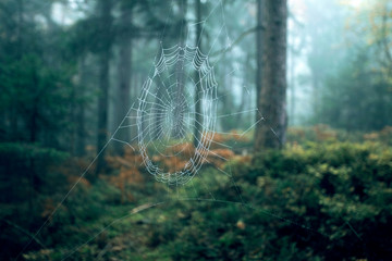 Beautiful spider web in morning foggy forest landscape. Selective focus used.