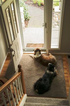 Dogs at doorway