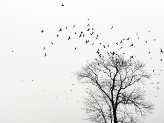 Mystic abstract landscape with birds over trees that fly in the shape of an arc or female breasts (breast cancer, anxiety, depression - concept)