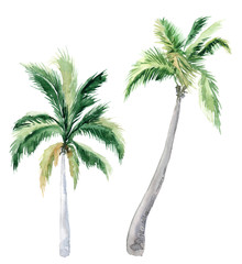 Set of pictures of hand drawn watercolor palm trees. picturesque image of a palm tree. palm tree on the beach