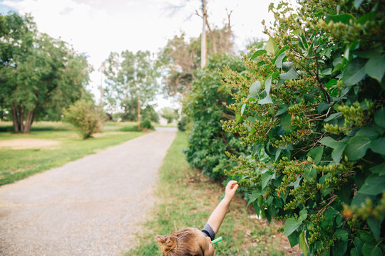 Toddler girl with a whistle in her mouth reaching for a bud on a big lilac bush.