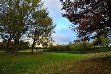 Jesienne drzewa w parku w słoneczny dzień.