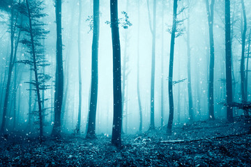 Lovely snowfall in the foggy blue colored forest landscape.
