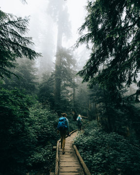 Two people on a hike