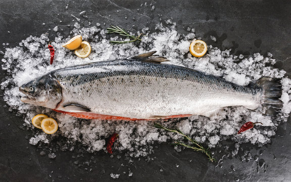 Fresh raw salmon red fish with spices on ice over dark stone background. Creative layout made of fish, top view, flat lay.