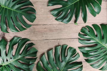 Wall Mural - Flat lay creative frame of tropical nature leaves Monstera on rustic wood grunge background.