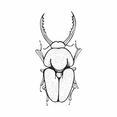Beetle. Vector black and white sketching.