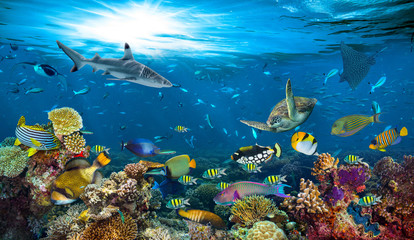 Poster Coral reefs underwater paradise background coral reef wildlife nature collage with shark manta ray sea turtle colorful fish background