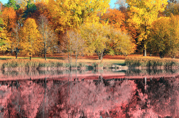 artistic photo of autumn forest