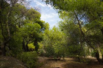 soft focus south dry park nature landscape