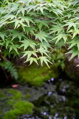 もみじと日本庭園