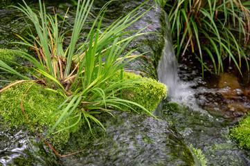 苔と日本庭園