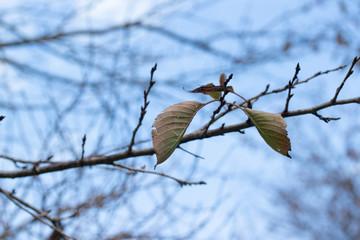 枯れ葉と枝