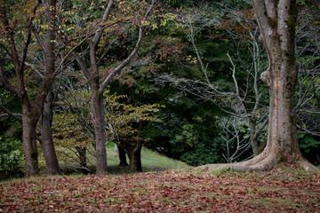 秋の公園の木々
