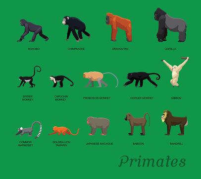 Primate Species Set Cartoon Vector Illustration