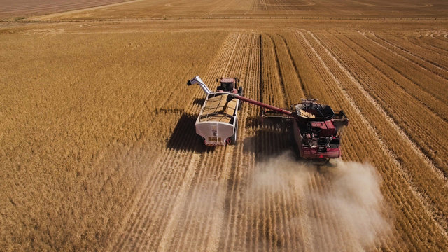 Drone shot behind harvester and support truck working a wheat field.