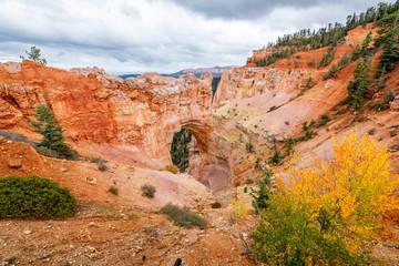 Fototapete - Bryce Canyon's Natural Bridge