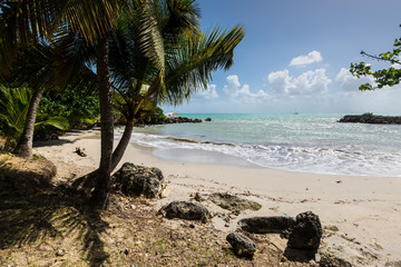 Paradise lagoon beach and palm trees, the Gosier in Guadeloupe island, Caribbean