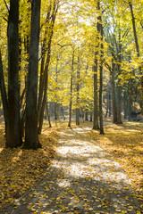 Autumn landscape. Pathway in the autumn park.