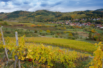 Weinberge bei Ohlsbach im Kinzigtal