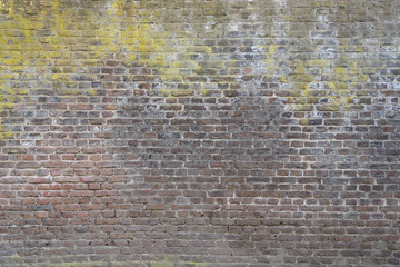 Old rough grunge brick wall texture and dry moss cover partly on the wall.