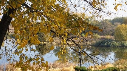Yellow tree on the background of the landscape with the river and the forest in the autumn warm day