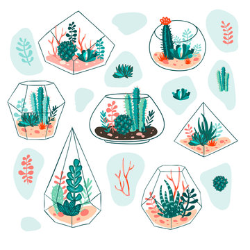 Set of succulents and cactus with terrariums. Vector floral design