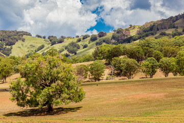 Landscape view of the Upper Hunter Valley, NSW, Australia.
