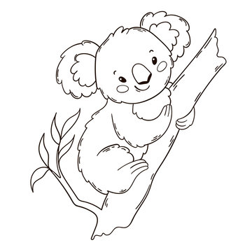 Cute Australian Koala Bear on a tree. Black and white outline illustration. Coloring book page.