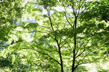秋の青葉1