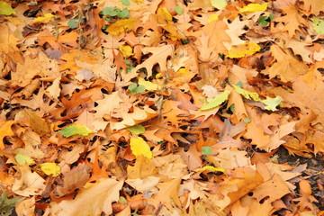 Herbstlaub 4