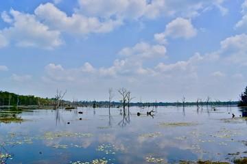 Lake in Agkor area, Cambodia.