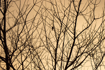 Bare trees, leafless branches and a bird sitting on a twig.
