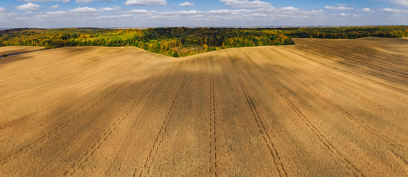 autumn aerial panoramic drone countryside corn field and forest with colorful trees blue sky ukrainian lanscape