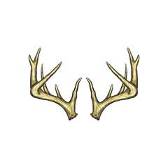 Handrawn antler vector, Hunting logo design inspiration