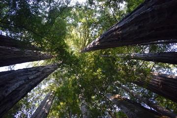 Sequoia Forest, California