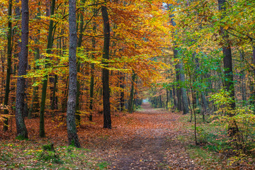 Chojnowski landscape park at autumn near Konstancin-Jeziorna, Masovia, Poland