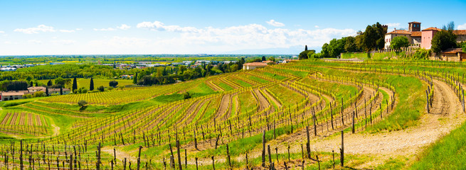 Panoramic view of vineyards and castle in Buttrio