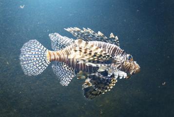 Image of the beautiful fish