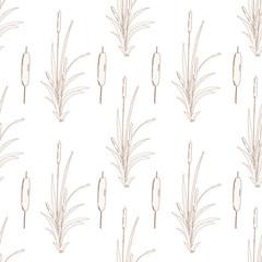 Reeds, sedge, cattail. Sketch. Seamless. Singleton. On a white background. Wallpaper.