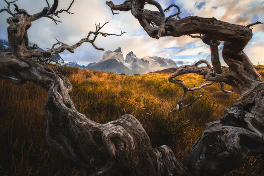 Torres del Paine National Park. The concept of extreme and active tourism. Magnificent clouds with old wood. Snow-covered black rocks of Los Cuernos