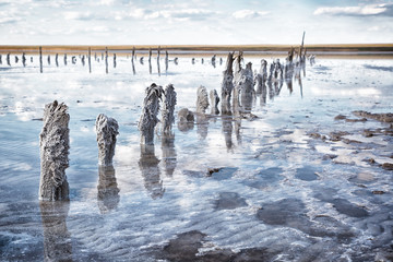 Wooden posts covered with salt, Lake Elton, Russia.