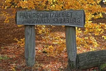 Eingang zum Naturschutzgebiet Urwald Sababurg