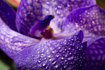 Orchid flower with water droplets blurring close-up